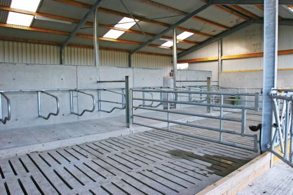 Tidy Suckler Shed For 20 Cow Herd 01 May 2013 Premium