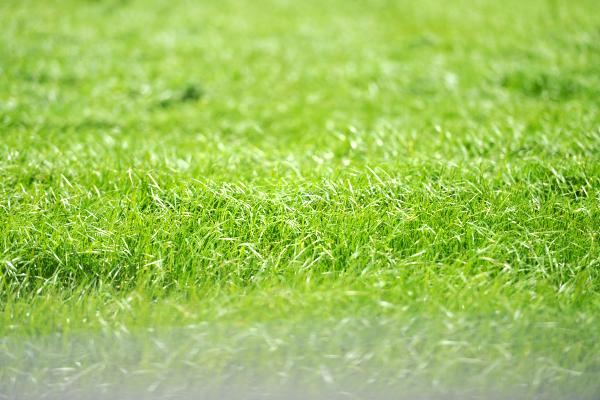 how to grow grass naturally