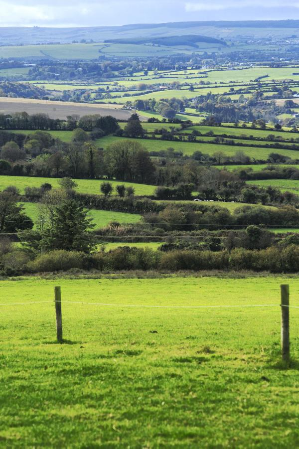 Ireland needs to shape its own agriculture to 2020 and beyond