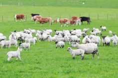 Tillage and sheep fencing to get stamp of approval