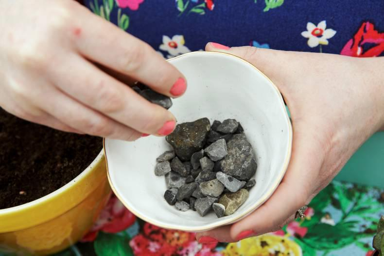 Place the medium size rocks at the end of the container, followed by the smaller rocks. Photo: Donal O' Leary
