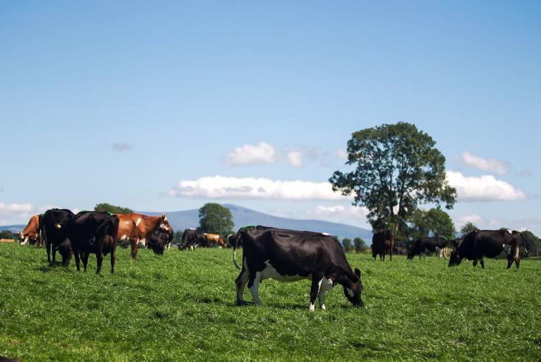 Greenfield update herd fertility and soil fertility key for Greenfield farm