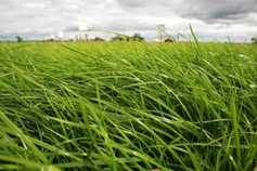 PastureBase to merge with AgriNet Grass to offer one package