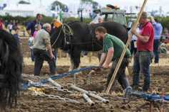 Watch: Vintage highlights from the Ploughing