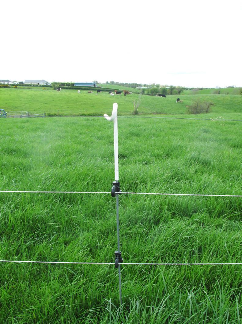 Temporary sheep fencing – grazing surplus grass and forage crops 07