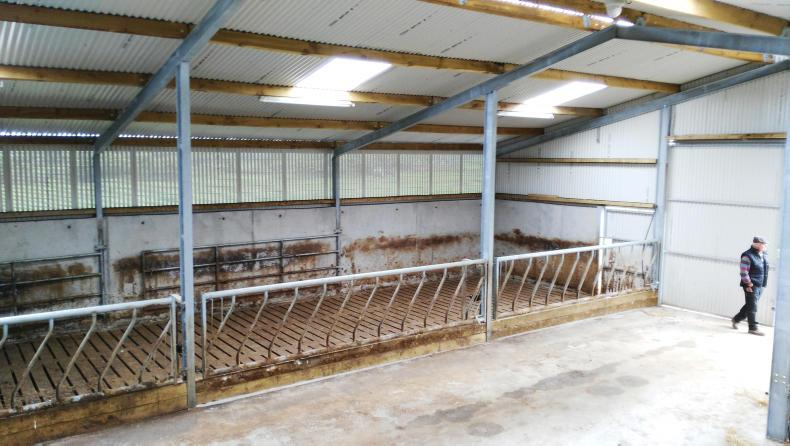 Watch suckling made simple with three bay cattle shed 27 for 3 bay shed