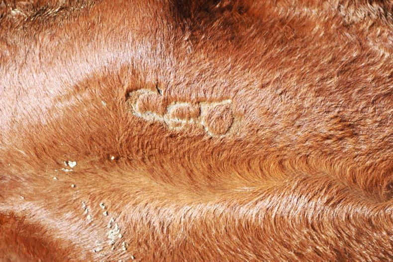 All animals are branded with owners individual mark for identification purposes