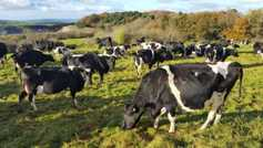 Consultation on climate change plan for Irish agriculture opens
