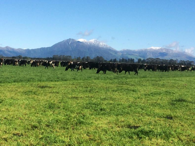 The recipients of the Stephen Cullinan scholarship spent time on dairy farms in New Zealand.