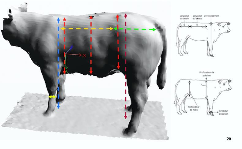Fig 2. A 3D image of an animal generated by the new technology