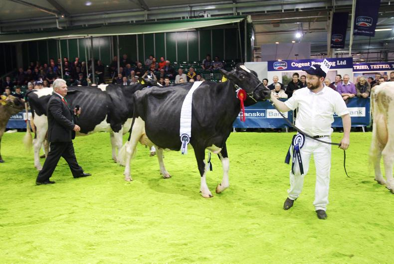 Selwyn Donald placed Evergreen Duplex Ebony, owned by Liam Murphy from Fenagh and shown by Stephen McLaughlin from Kildare, as the 2015 supreme interbreed champion.