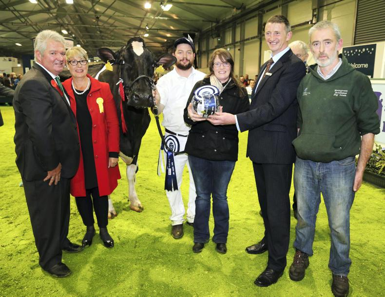 The supreme interbreed champion at the 2015 Royal Ulster Winter Fair selected by judge Selwyn Donald was a Holstein cow exhibited by Liam Murphy from Fenagh, Co Carlow.