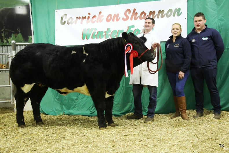 Senior Belgian Blue champion from David Adair. Also pictured Kevin Grimes from Greenvale (sponsor).