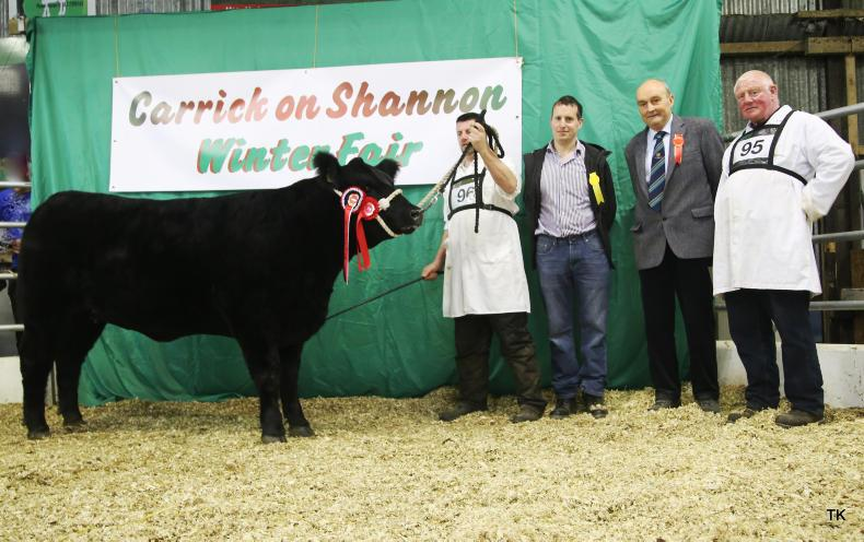 Angus champion from Bernard Kerins. Also pictured John Farrell (Irish Angus Society president), judge Pat Sheedy and Anthony Scanlon.