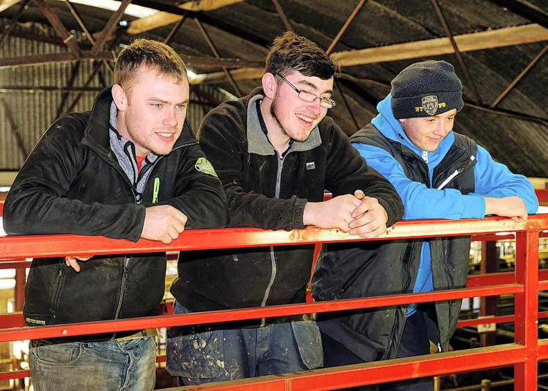 James Taylor, Castleisland, Co Kerry; Sean Guerin and Dan Lane, Newmarke;, at the Christmas fat-stock show and sale in Kanturk, Co Cork.\ Mike Hoare