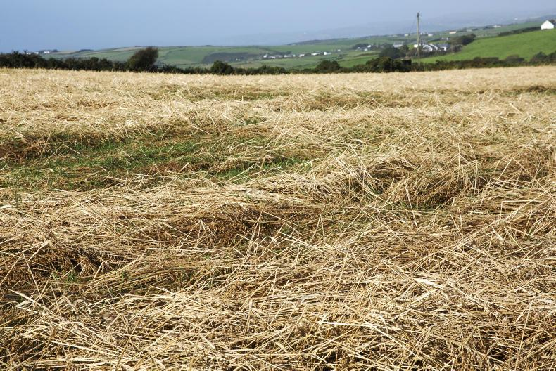 In a survey carried out this week, suppliers confirmed straw scarcity. Photo: Donal O' Leary
