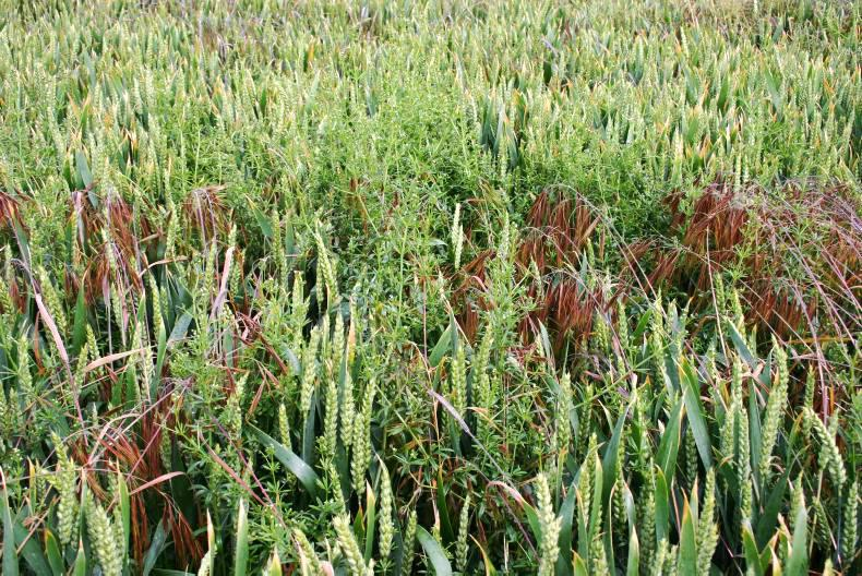 Thorough crop inspections in early spring should help to prevent such problems appearing unexpectedly at the end of the growing season.