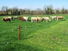 Watch: beef farm efficiency series – the €150/cow challenge starts with grass