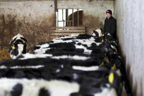 calves machine for sale