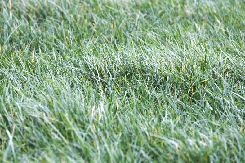 Grass 10 targets 10 grazings leading to 10t of grass dry matter utilisation per hectare each year on Irish farms.