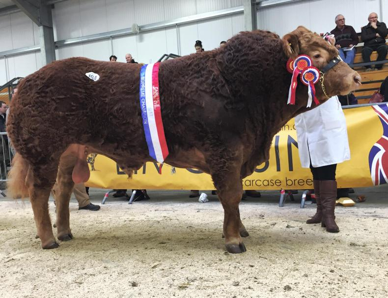 Overall and intermediate champion Foxhillfarm Louisvuitton.