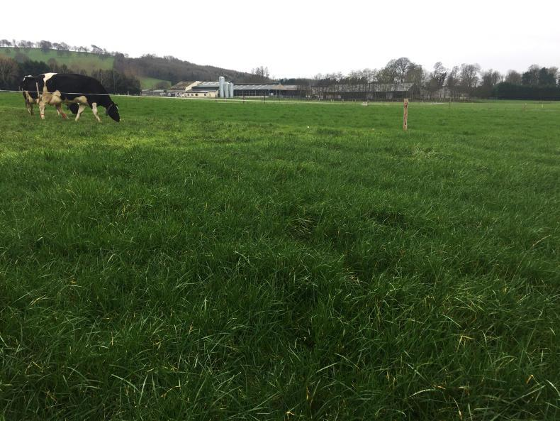 The pre-grazing yield in and post grazing residuals in mid-February. Cows were on grass and 8kg of meal