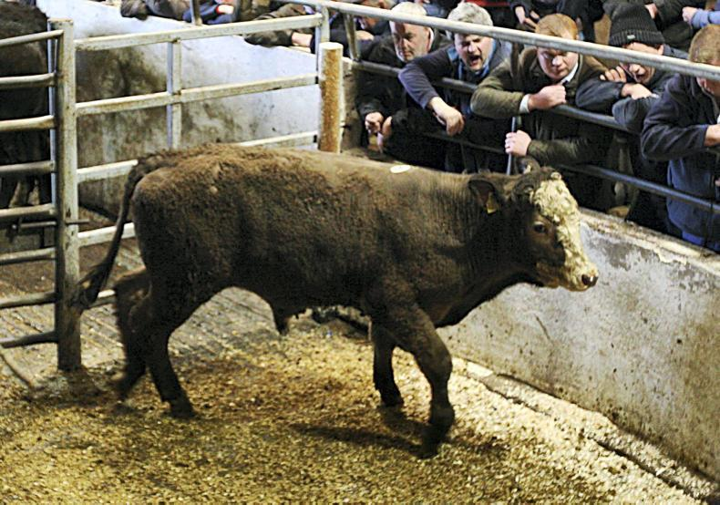 This Limousin-cross bull, born June 2016 and weighing 360kg, sold for €820 (€2.28/kg).