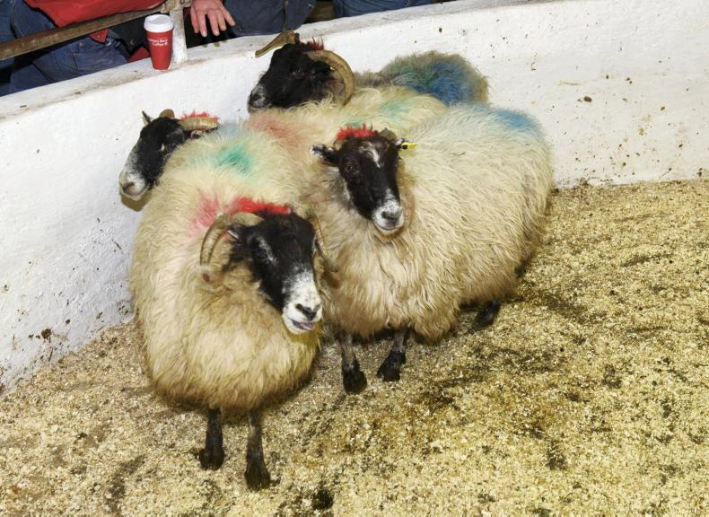 These four cull ewes, weighing 63kg, sold for €35 each.