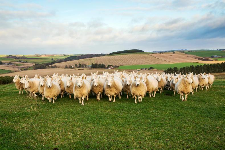 More sheep than people in Ireland - Census 2016 20 April 2017 Free