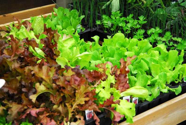 Raising plants in small pots or cell trays gets around the vagaries of spring weather.