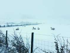 Farm Profit Programme: bad weather takes its toll