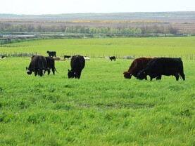 Farm Profit Programme: Grazing kicks off in Caithness