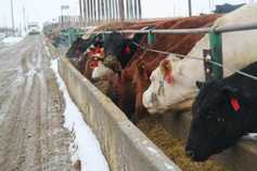 Beef research: addressing greenhouse gas emissions from feedlot cattle