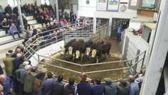 In pictures: Friesian cows make €400 over their weight at Bandon