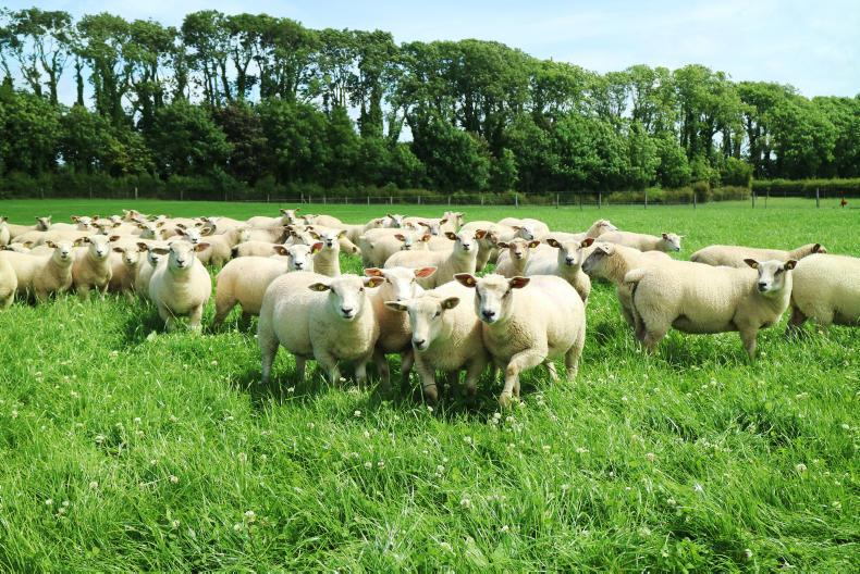 The event takes place in Mellows Campus Athenry on Wednesday 21 June from 11am to 5pm and offers farmers a great opportunity to get an update on a number of aspects of sheep production.