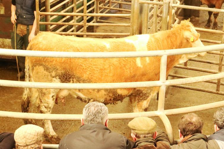 This Limousin cow, born April 2006 and weighing 595kg, sold for €1,180 (€1.98/kg).