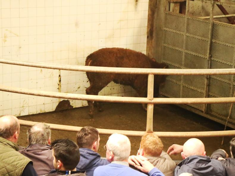 This Angus heifer, born July 2015 and weighing 375kg, sold for €790 (€2.11/kg).