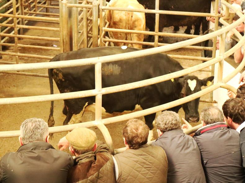This Friesian cow, born March 2014 and weighing 675kg, sold for €965 (€1.43/kg).