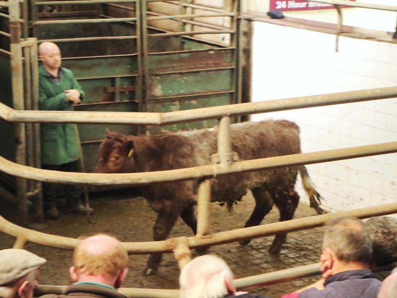 This bullock born January 2015 and weighing 705kg, sold for €1,515 (€2.15/kg).