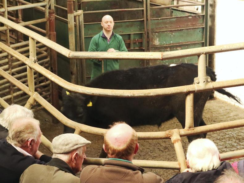 This bullock, born October 2016 and weighing 320kg, sold for €940 (€2.94/kg).