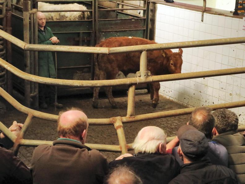 This bullock, born October 2015 and weighing 470kg, sold for €900 (€1.992/kg).