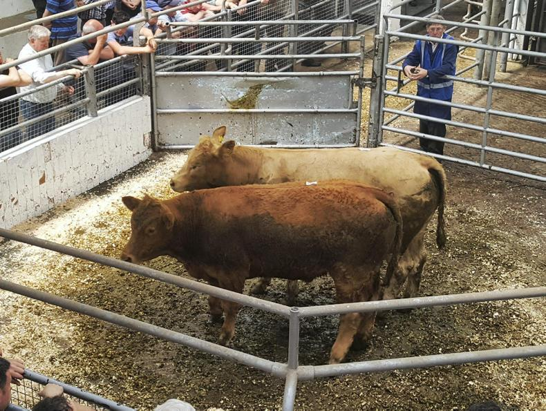 These bullocks, born April 2016, weighed 440kg and made €1,250, €2.84/kg.