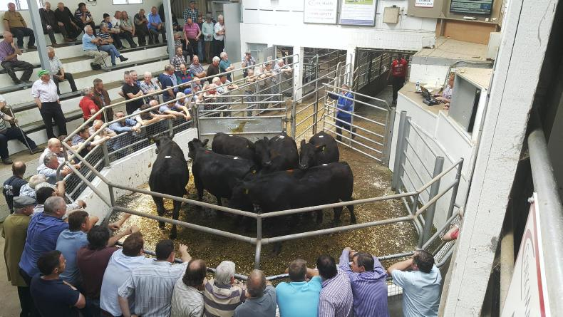 These bullocks, born March 2015, weighed 508kg and made €1,010, €1.99/kg.