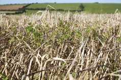 Tillage crisis fund lands at last