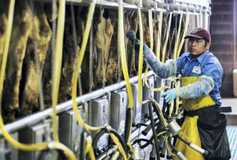 Dairy markets: US dairy farmers keep the milk tap flowing