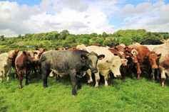 €3,000 to start beef producer organisations