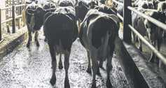 Three ways to control energy costs in the milking parlour