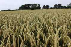 Co-ops must set the lead on grain price