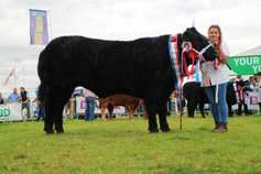 In pictures: Tullamore Show cattle results