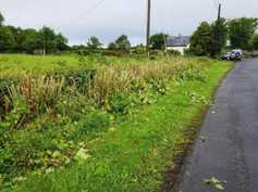 Letter: dealing with Japanese knotweed